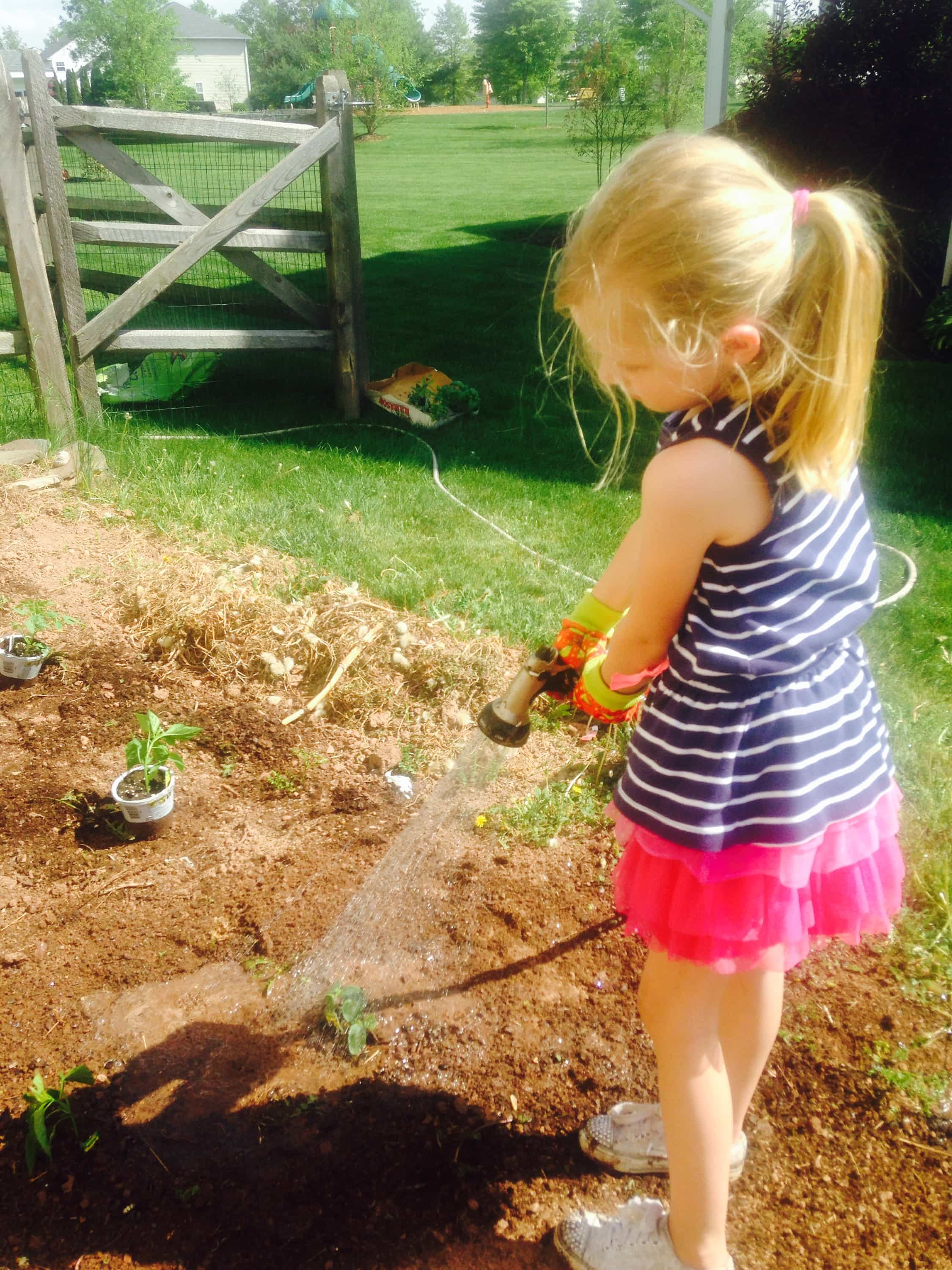 Little girl watering zucchini plants in the garden.